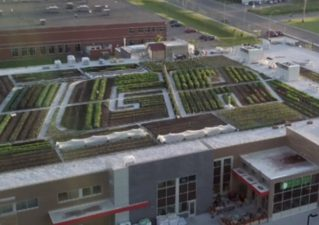 Iga-roof-garden-319x225 in