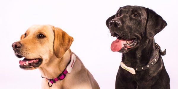 Finnischer Händler für Tierbedarf startet erstes Kundenbindungsprogramm für Hunde