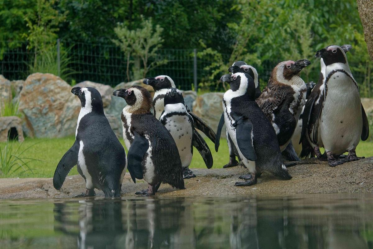 Opel-Zoo bindet jeden Besucher bei Finanzierung des Neubauprojektes ein